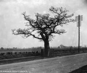 Kett's Oak which was used as a rally point for rebels on the main road from Wymondham to Norwich. This tree still stands over 450 years later!!